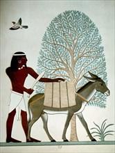 Egyptien avec un âne