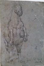 Vélasquez, Dessin d'un cheval de face
