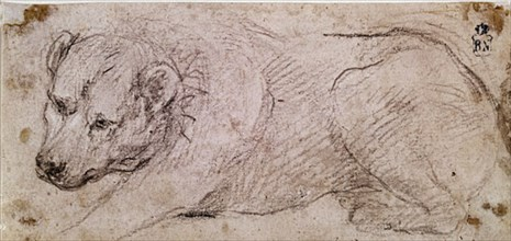 Velázquez, Drawing of a lying down dog