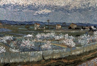 Van Gogh, La Crau et pêchers en fleurs