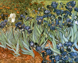 Van Gogh, Les Iris