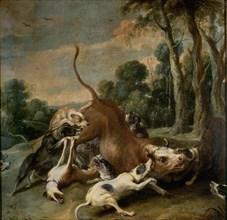 Snyders, Taureau épuisé par des chiens