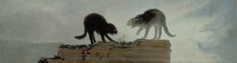 Goya, Combat de chats