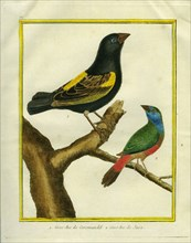Hawfinch of Coromandel and the Hawfinch of Java