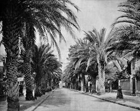 L'avenue des palmiers, hyares, france,