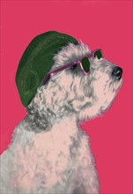 Dog with Glasses and Hat