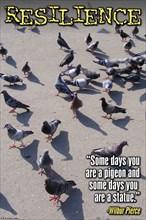 Pigeons 2008