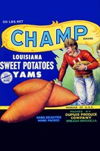 Champ Louisiana Sweet Potatoes