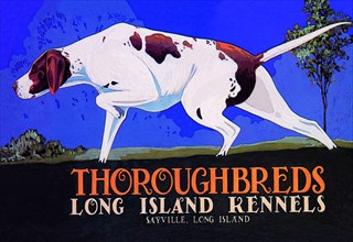 Thoroughbreds - Long Island Kennels