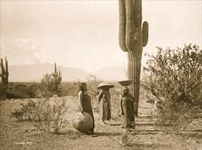 Saguaro fruit gatherers--Maricopa 1907