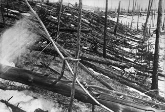 Tunguska river region of central siberia, trees felled by the explosion of a meteorite 7km to the north in 1908, this picture was taken in may of 1929.