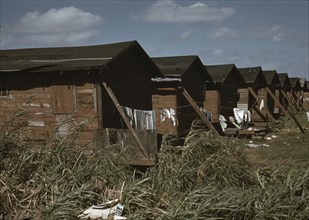 Condemned Negro Migratory Worker Homes