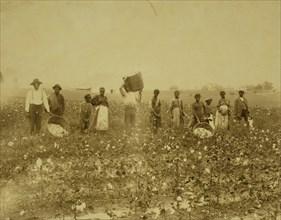 Land of cotton