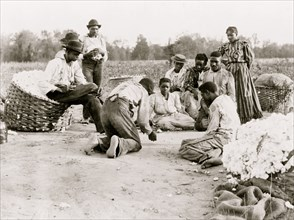African Americans resting and shooting dice at edge of cotton field
