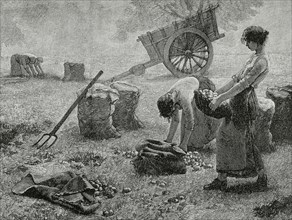 Agriculture. Mowing. Engraving, 19th century.
