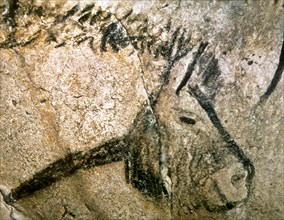 Cave of Niaux. Prehistoric painting. Horse head. France.